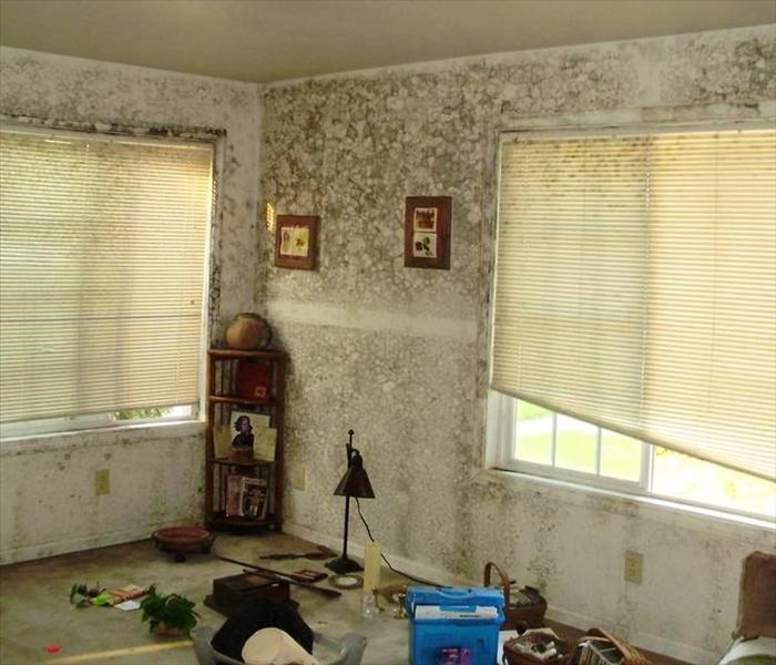 Living room with extensive water and mold damage