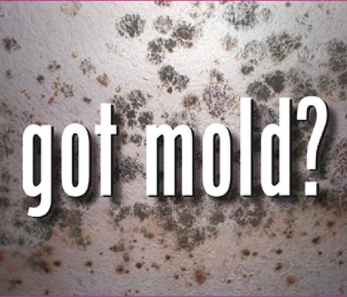 Mold Remediation Who to call if you have visible mold