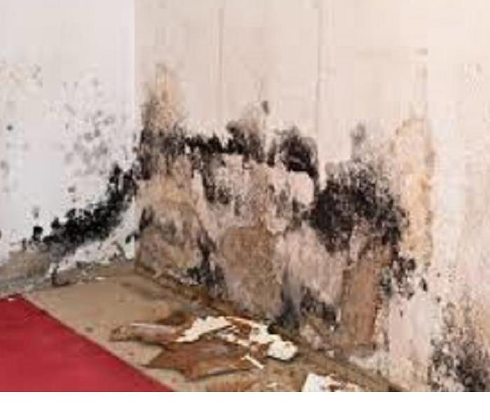 Mold Remediation How did I get mold?